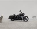 Harley-Davidson 2020年式TOURING新車售價公布